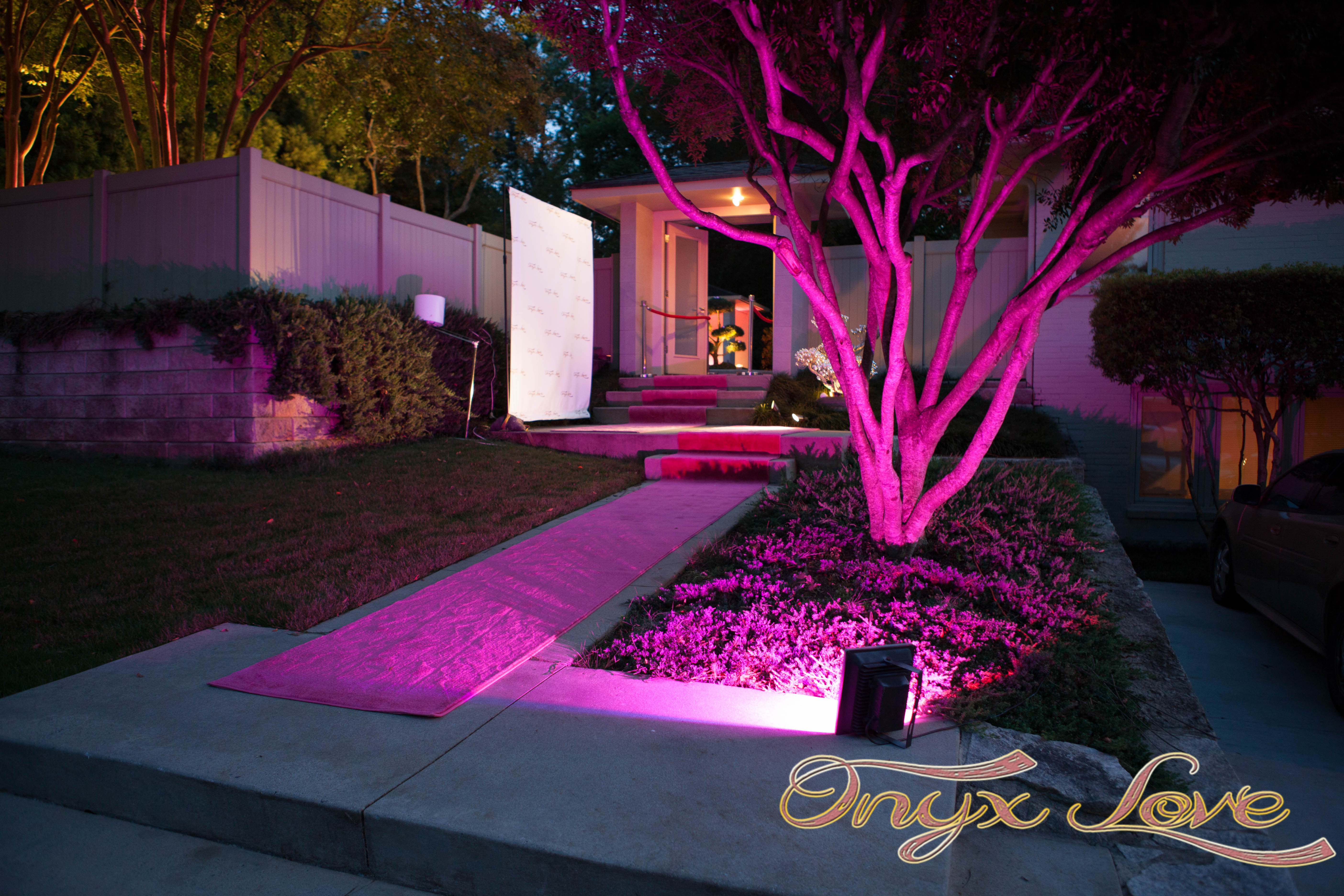 The Pink Carpet Walk